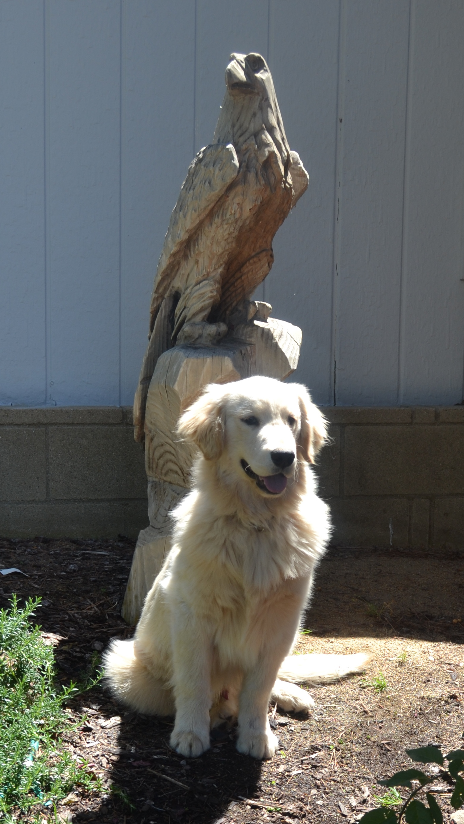 aguanga girls The best aguanga pet sitters are here find the perfect pet sitter in aguanga, ca for your furry friends start searching for petting sitting, free.